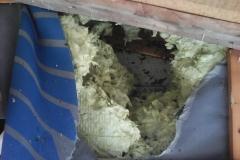 velikost a umístění po vosím hnízdě